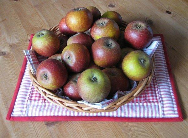 Die diesjährige - erste- Apfelernte, knapp 3 kg Cox Orange, den Baum haben wir vor 2 Jahren im Topf gekauft und erst letzten Herbst richtig eingepflanzt. Die schmecken sooo gut...
