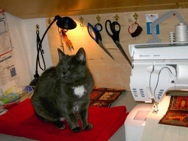 Katze und Vermieterin... passt nicht!