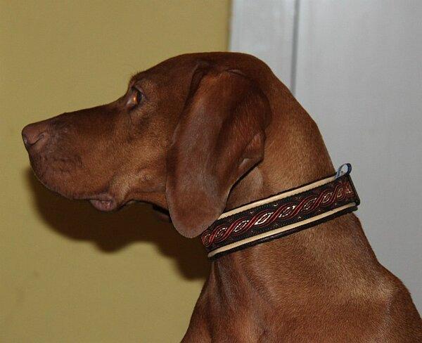 buebchen-halsband